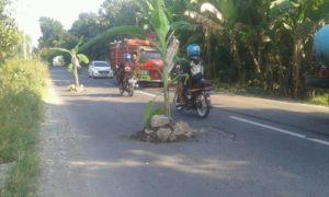Jalan rusak di Desa Padaran, Rembang sempat ditanami pohon pisang oleh warga (facebook).