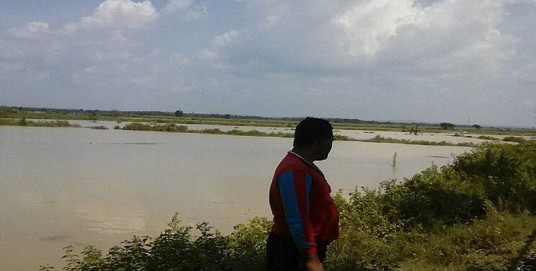 Banjir Surut, Petambak Bandeng Masih Was – Was