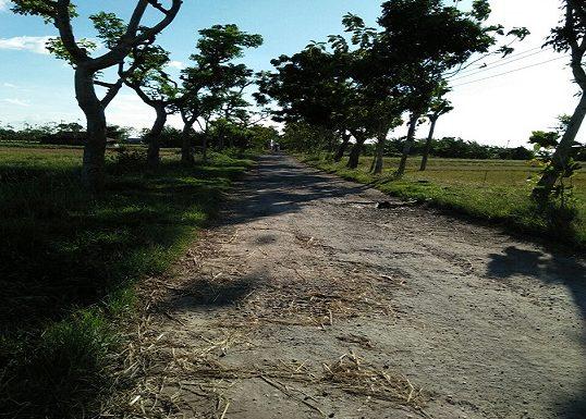 Tanami Jalan Dengan Pohon Pisang, Imbas Kejengkelan Warga