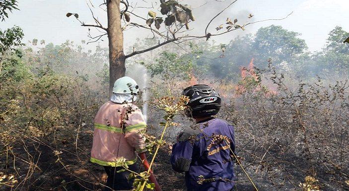 Kebakaran Lahan Cemaskan Warga, Dipicu Orang Gila Bakar Sampah