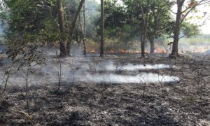 Kebakaran melanda lahan kosong di Dusun Mbesi, Desa Kedungrejo, Rembang, Minggu siang.