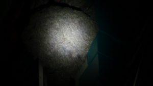 Sarang tawon sebelum dibakar. (gambar atas) Petugas Damkar Pemkab Rembang membakar sarang tawon yang menempel di dinding bangunan TB. Hartono, Selasa malam.