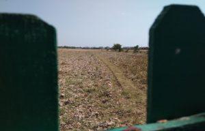 Lahan pertanian di pinggiran Kota Rembang semakin terdesak oleh perumahan.