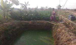 Sudir menunjukkan tempat penampungan air limbah, untuk mengairi tanaman tembakau.