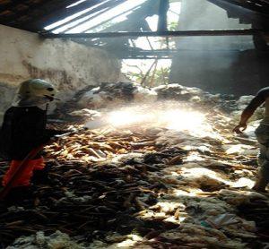 Kebakaran gudang penyimpanan randu di Desa Jolotundo. (gambar atas) Kebakaran di Desa Kedungasem, Kec. Sumber, Rabu. Tampak seekor sapi ikut mati terpanggang.