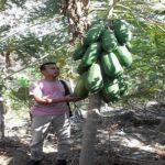 Potensi agrowisata sangat terbuka dikembangkan di wilayah Kabupaten Rembang.