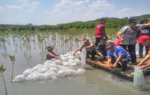 Penebaran benih ikan bandeng di jembatan merah kawasan hutan bakau Dusun Kaliuntu, Desa Pasar Banggi, Rabu pagi.