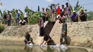 Penebaran benih ikan nila di embung Desa Pasedan, Kecamatan Bulu, Senin (29/10).