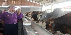 Bupati Rembang, Abdul Hafidz mengunjungi kontes ternak sapi, beberapa waktu lalu.