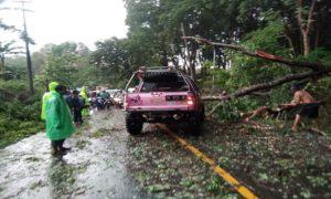 Pohon milik Perhutani di jalan nasional Rembang – Blora, tepatnya di Desa Kadiwono, Kecamatan Bulu, Kabupaten Rembang.