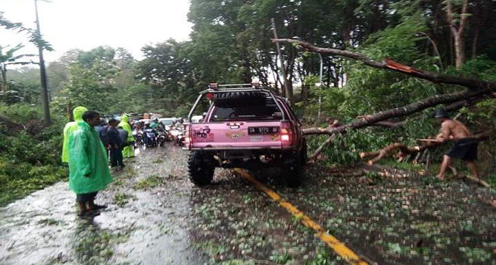 Reaksi Perhutani Soal Pohon Rawan Tumbang, Mereka Ungkap Kendala Tak Bisa Langsung Ditebang