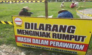 Sejumlah pekerja melakukan perawatan rumput di Alun – Alun Rembang.