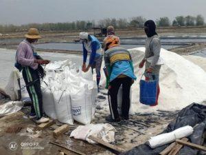 Aktivitas petambak garam dan pengiriman barang di Desa Purworejo, Kecamatan Kaliori.