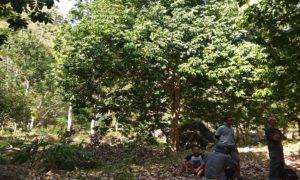 Perbukitan Desa Woro, Kecamatan Kragan.