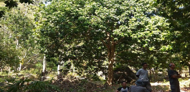 Akibat Penjarahan Pohon, Ini Dua Dampak Yang Semakin Dirasakan