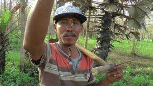 Serangan hama ulat bulu di jalan antara Desa Sulang – Jatimudo – Karangharjo Kecamatan Sulang, mengganggu pengguna jalan.