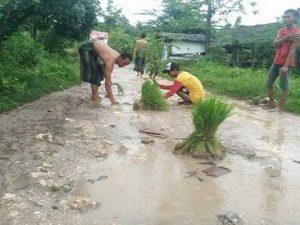 Warga Desa Gunungmulyo, Kecamatan Sarang menanami jalan rusak dengan benih padi, belum lama ini.