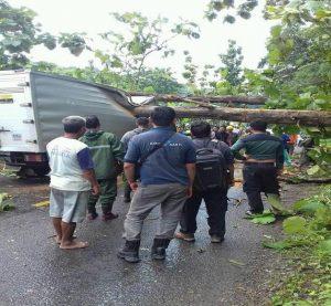 Truk box rusak tertimpa pohon jati yang roboh di Desa Kadiwono, Kecamatan Bulu. (facebook).