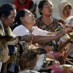 Ayam kampung bisa menjadi sumber penghasilan keluarga.