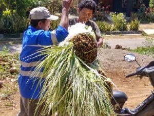 Warga membeli janur di Desa Bamban. (Foto atas) Suasana kebun kelapa di Desa Bamban, Kecamatan Pamotan.