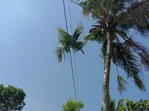 TKP pohon kelapa. (foto atas) Korban dievakuasi menuju Puskesmas, namun belakangan akhirnya meninggal dunia.