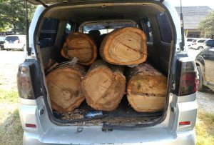Barang bukti mobil APV yang mengangkut kayu hasil curian.