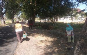 Sejumlah warga Desa Sridadi, Rembang mengais buah asem yang tercecer di pinggir jalan, Minggu (16/06).