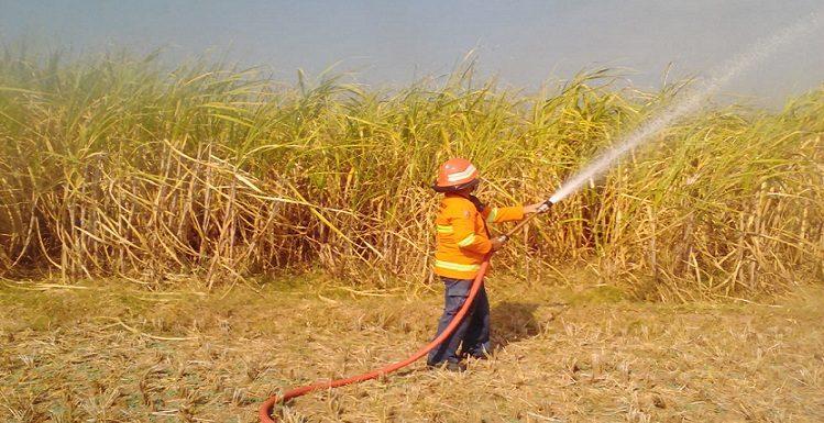 Pemadaman Lahan Tebu Terbakar Justru Dilarang, Warga Datang Bawa Senjata Tajam