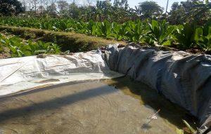 Petani tembakau harus menyediakan pasokan air yang cukup, di tengah panas ekstrim seperti saat ini.