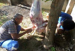 Sutrisno, warga Dusun Kedungdoro Kelurahan Leteh menguliti hewan qurban, Minggu (11/08).