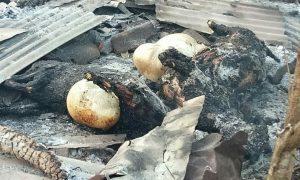 Ternak yang mati terpanggang, usai kandang terbakar di Dusun Bulu Desa Kalitengah, Senin dini hari.