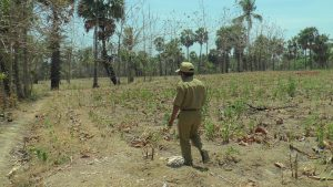 Lokasi lahan Mah Bos di Desa Jatimudo, Kecamatan Sulang yang diyakini menjadi tempat kuburan massal korban penembakan.