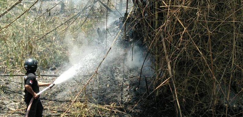 Kebakaran Beruntun Di 2 Titik, Salah Satunya Berawal Dari Sarang Tawon