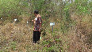 Sekretaris Desa Kabongan Kidul, Joko Sugiyono menunjukkan deretan makam tanpa identitas korban kapal Senopati Nusantara.