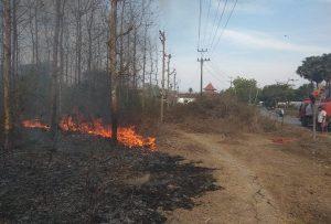 Kebakaran kebun jati di Kelurahan Magersari, Rembang, Senin (07/10).