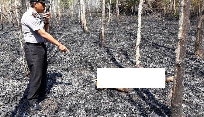 Lagi, Seorang Pria Tewas Terbakar Saat Membersihkan Lahan