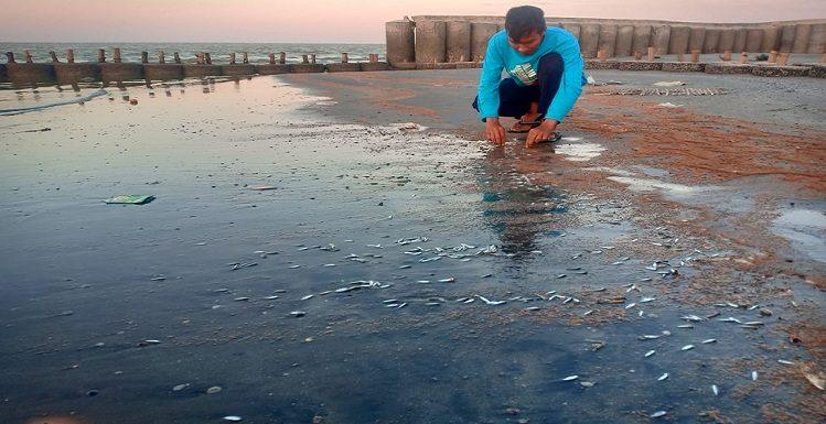 Kasus Ikan Mati Bikin Resah, Warna Pasir Ditemukan Berbeda