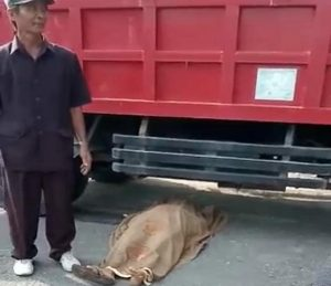 Korban warga desa Banyuurip, Kec. Gunem terlindas truk hingga meninggal dunia.