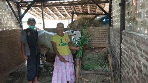 Salah satu warga Desa Rendeng, Kecamatan Sale yang ternak sapinya sempat mati, belum lama ini.