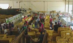 Suasana petani menyetor tembakau di gudang PT. Sadana Arif Nusa, Jl. Rembang – Blora.