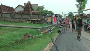 Tiang listrik di sebelah utara Pertigaan Ngebrak Desa Tlogotunggal Kec. Sumber ambruk, Rabu (11/12).