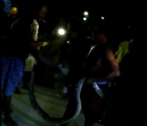 Ular piton ditemukan warga Desa Gunungsari Kecamatan Kaliori. (Foto atas) Petugas Damkar Pemkab Rembang saat menyisir ular kobra di Desa Pedak Kecamatan Sulang.