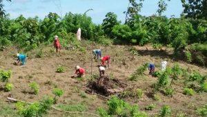 Aktivitas petani yang memanfaatkan lahan Perhutani KPH Mantingan.