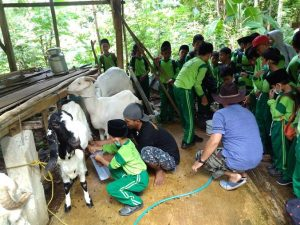 Pelajar SD IT Avicena Lasem belajar memeras susu di pusat peternakan kambing etawa Desa Kemadu, Kecamatan Sulang.