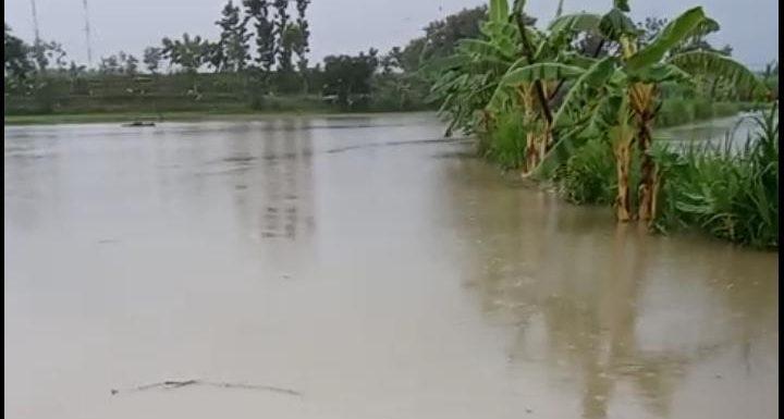 Hujan Deras, Puluhan Hektar Padi Dan Belasan Rumah Kebanjiran