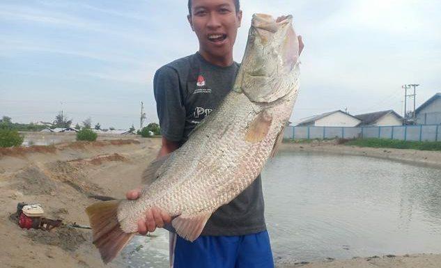 Ikan Cukil, Antara Bikin Resah Dan Berkah
