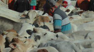 Pasar Hewan Pamotan menjadi salah satu pusat penjualan hewan qurban.