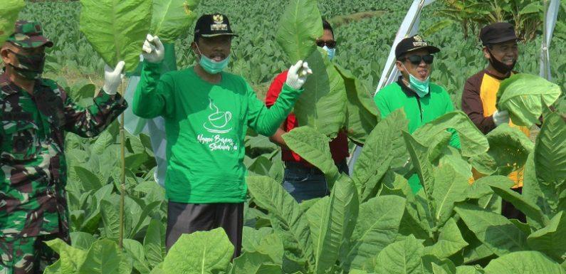 Ketemu Perusahaan Mitra, Petani Tembakau Menumpahkan Sejumlah Keluhan