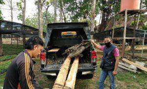 Petugas Polhutmob KPH Mantingan mengamankan sepeda motor dan dua batang kayu jati.