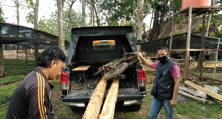 Motor Dan Kayu Jati Diamankan, Pelaku Kabur Karena Petugas Terhalang Jemuran Tembakau